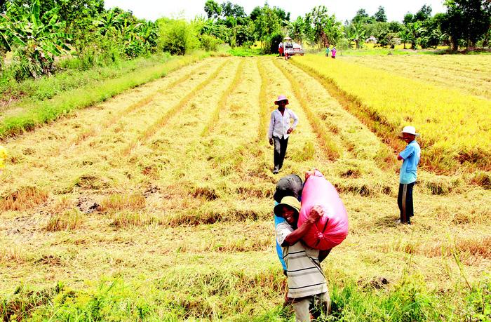 Xuất khẩu gạo tuy khởi sắc, nhưng vẫn chưa bền vững