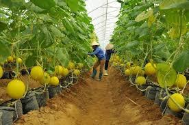 VCCI: Nhiều điều kiện gây khó hiểu, không rõ ràng trong kinh doanh lĩnh vực nông nghiệp