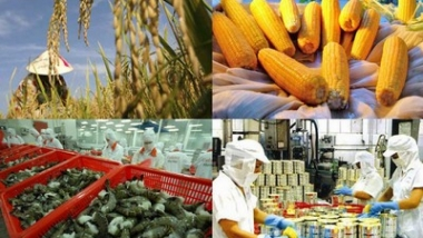 5 tháng đầu năm 2020, xuất khẩu nông, lâm, thủy sản ước đạt gần 15,5 tỷ USD