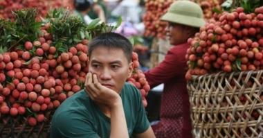 Bao giờ nông sản Việt thoát bóng Trung Quốc?