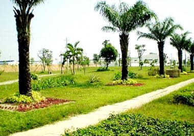 Cây xanh đô thị Kim Phát Tài: Sức bật từ niềm đam mê!