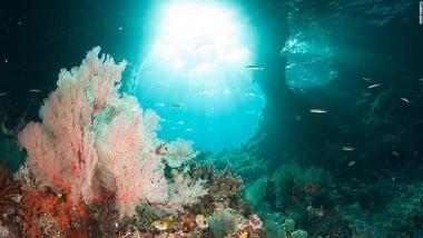 Raja Ampat - rạn san hô đáng kinh ngạc của Indonesia