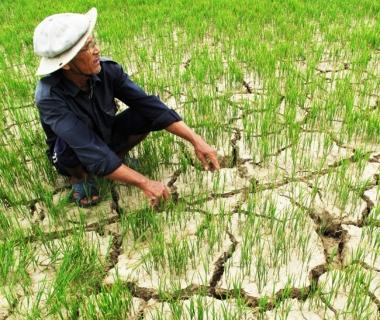 Biến đổi khí hậu ảnh hưởng đến phát triển bền vững vùng Đồng bằng Sông Cửu Long