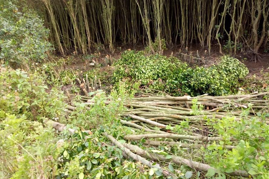 Phạt tới 100 triệu đồng đối với hành vi phá rừng trái pháp luật