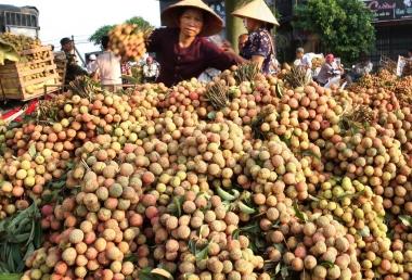 Tìm hướng xuất khẩu cho hoa quả Việt Nam: Nhìn từ thành công của vải thiều