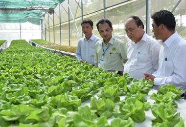 Chậm giải ngân gói tín dụng phát triển nông nghiệp công nghệ cao do đâu?