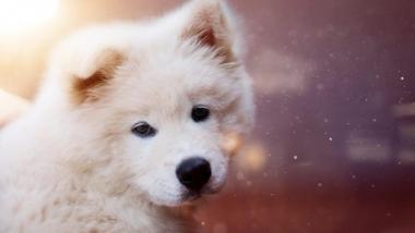"""Những chú """"cún"""" đẹp nhất thế giới"""