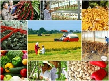 7 tháng đầu năm 2019, xuất khẩu nông, lâm thủy sản đạt 23,03 tỷ USD