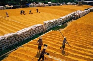Xuất khẩu gạo 9 tháng giảm cả về lượng và giá trị
