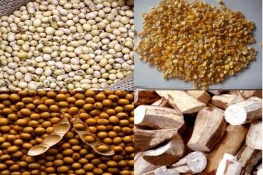 Nguyên liệu nhập khẩu: Nỗi lo của ngành chăn nuôi