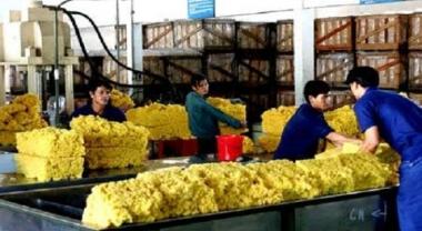 Thị trường cao su châu Á tăng mạnh nhờ lực mua bắt đáy