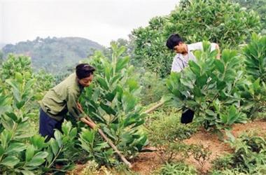 Hỗ trợ khoán bảo vệ rừng 400.000 đồng/ha/năm