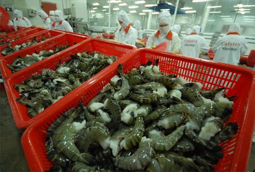 Xuất khẩu tôm sang Mỹ lấy lại đà tăng trưởng