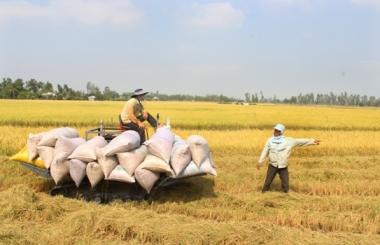 Gia hạn thêm 2 tháng cho vay mua tạm trữ thóc, gạo