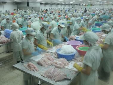 Tạm ngừng đăng ký mới xuất khẩu cá bộ Siluriformes vào Hoa Kỳ