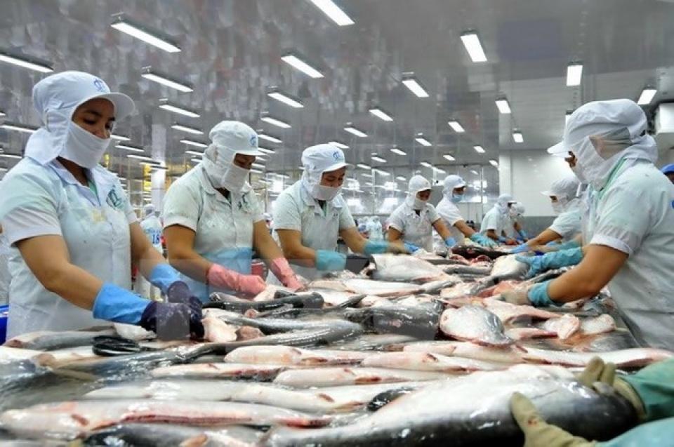 Cá da trơn Việt Nam đủ điều kiện xuất khẩu vào thị trường Hoa Kỳ