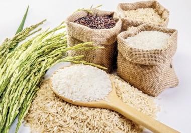 Gạo thơm xuất khẩu sang EU phải đảm bảo đủ những điều kiện gì?