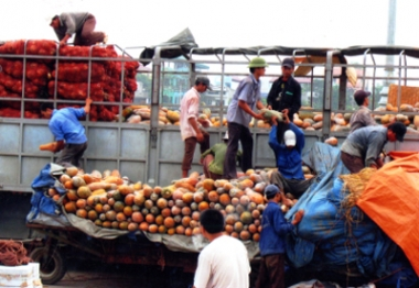 Doanh nghiệp Việt còn yếu năng lực xuất khẩu