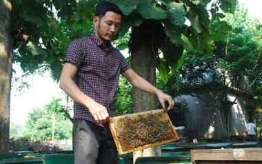 Giúp thanh niên làm giàu nhờ mô hình HTX nuôi ong