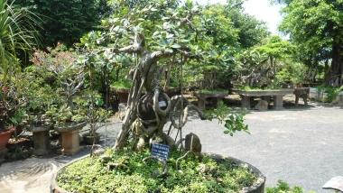 Vườn Kiểng Văn Cường khẳng định chỗ đứng trong làng sinh vật cảnh