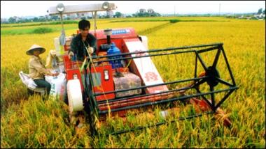 Doanh nghiệp giữ vai trò nòng cốt trong đổi mới sản xuất nông nghiệp