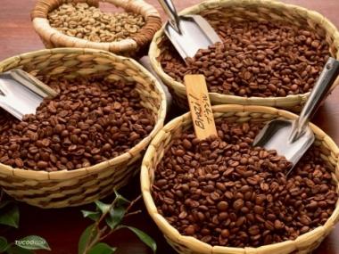 Giá cà phê khởi sắc khi bắt đầu niên vụ 2015/16