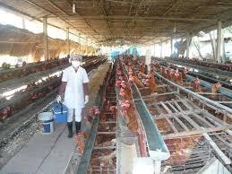 Nâng cao khả năng hội nhập ngành chăn nuôi