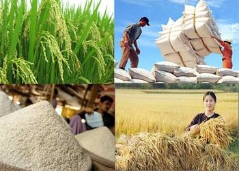 Báo cáo xuất khẩu gạo Việt Nam tháng 8-9/2015 của USDA
