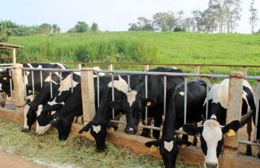 """Đón """"sóng"""" TPP: Ngành chăn nuôi tìm lợi thế cạnh tranh"""