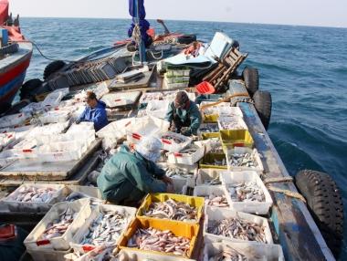 EU phạt thẻ vàng, thủy sản Việt Nam chịu thiệt hại gì?