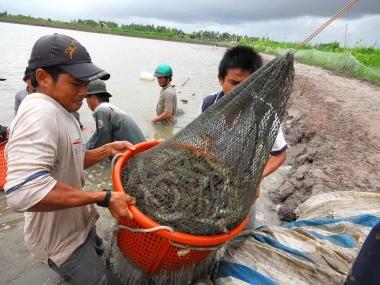 Chính sách cho ngành thủy sản đang không phát triển kịp tiến trình hội nhập