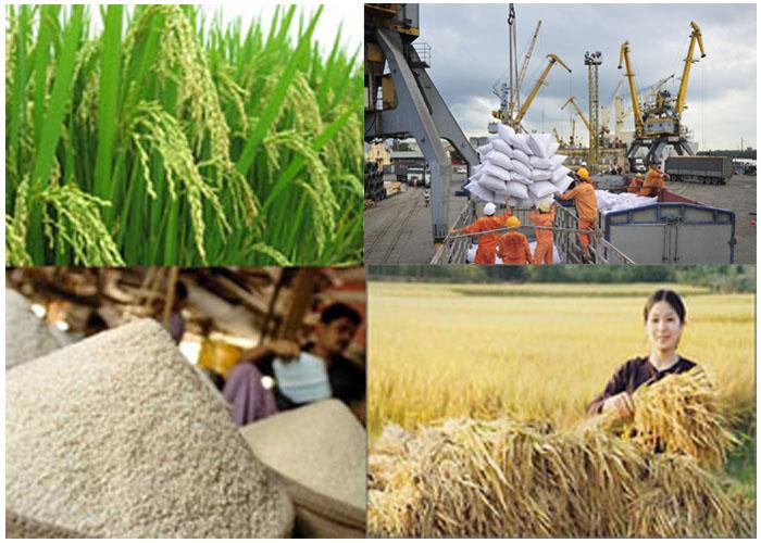 Xuất khẩu gạo: Hướng tới mục tiêu giảm lượng, tăng giá trị
