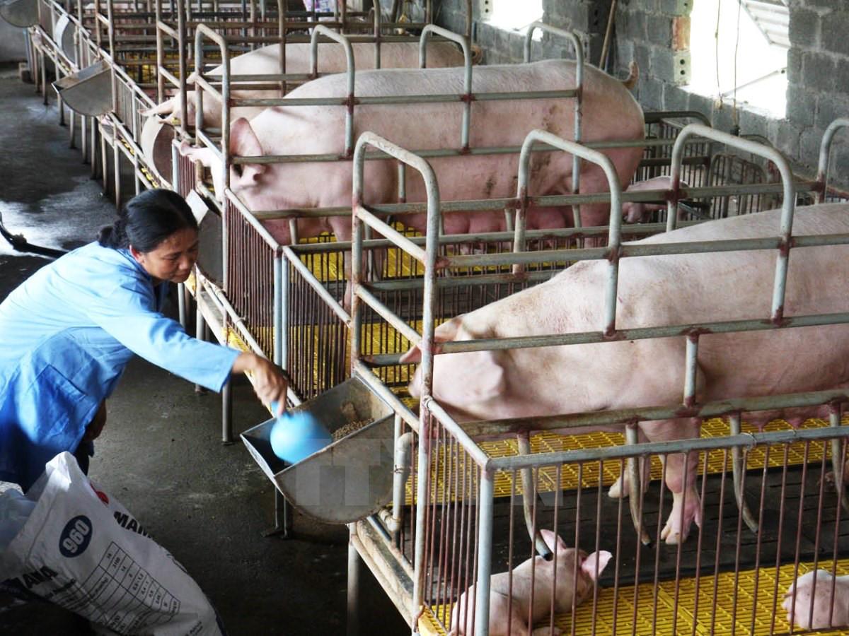 Đề xuất xây dựng dự án Luật Chăn nuôi
