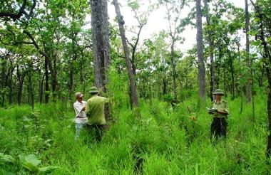 Quảng Trị: Năm 2020, đất nông nghiệp chiếm 87%