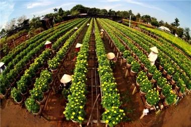 Tái cơ cấu nông nghiệp đến đâu rồi?