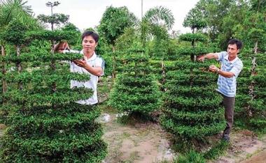 Tuổi trẻ Đồng bằng sông Cửu Long góp sức phát triển kinh tế tập thể