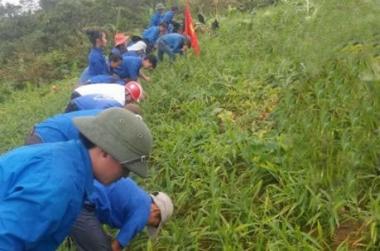Phát triển kinh tế tập thể: Nhìn từ mô hình trồng gừng của Đoàn xã Na Ngoi