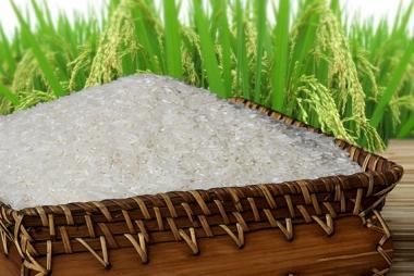Giá gạo tại Việt Nam tăng do nguồn cung khan hiếm