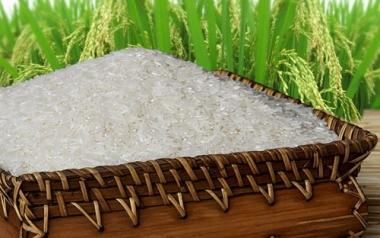 Cảnh báo xuất khẩu gạo sang Mỹ bị trả về
