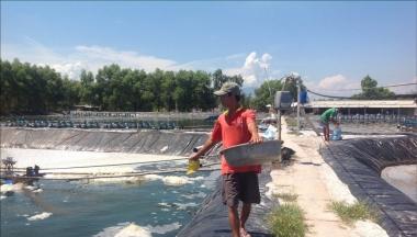Vụ cấp giấy phép khống tại Tổng cục Thủy sản: Khởi tố về Tội giả mạo trong công tác