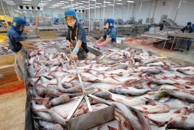 9 tháng năm 2017, xuất khẩu cá tra đạt 1,3 tỷ USD