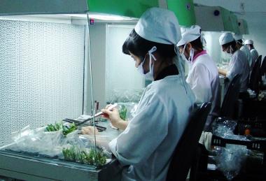 Phải có ít nhất 1 cán bộ kỹ thuật có trình độ từ cao đẳng trở lên về lĩnh vực trồng trọt