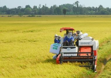 Vì sao doanh nghiệp nông nghiệp mãi không phát triển?