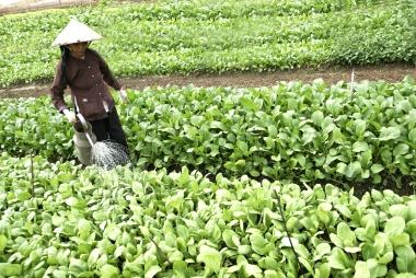 Phê duyệt Chương trình khuyến nông tỉnh Bắc Ninh giai đoạn 2020-2025