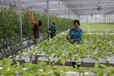Bắc Ninh đẩy mạnh phát triển kinh tế tập thể, hợp tác xã