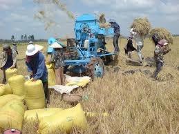 """Giá gạo xuất khẩu tăng: """"Niềm vui ngắn chẳng tày gang""""!"""