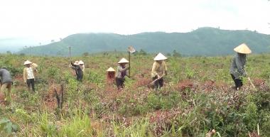 Cho vay vốn trồng rừng sản xuất, phát triển chăn nuôi với lãi suất 1,2%