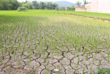 Quốc tế hỗ trợ nông nghiệp Việt Nam ứng phó với biến đổi khí hậu