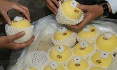 Táo Aomori chính thức có mặt trên thị trường Việt