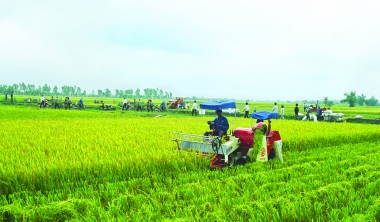 Khởi nghiệp trong nông nghiệp: Mới chỉ là các hiện tượng nhỏ, lẻ!